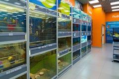 Zelenograd, Rusia - 15 de septiembre 2017 Pájaros y pescados en tienda del animal doméstico de cuatro patas en la alameda Panfilo Foto de archivo