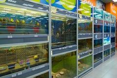 Zelenograd, Russie - 15 septembre 2017 Oiseaux et poissons dans le magasin d'animal familier de quatre pattes au mail Panfilov Images stock