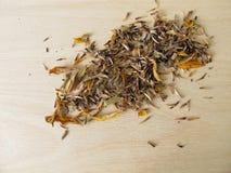 Zelf geoogste zaden van coneflowers Stock Foto