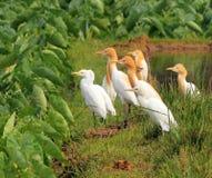 Zelfde vogels, verschillend gevederte. Stock Foto