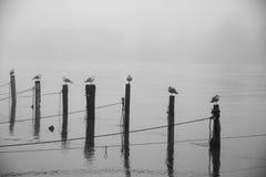 Zelfs nog meer vogels het wachten Stock Fotografie