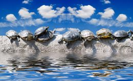 Zelfs zonnebaden de schildpadden reeds op s Stock Afbeeldingen