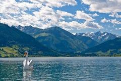 Zell morgens sehen See Österreich lizenzfreie stockfotos