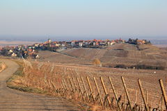 Zellenberg in the vineyard of Alsace Stock Image