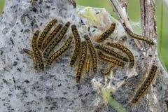 Zelt Caterpillar Lizenzfreies Stockfoto