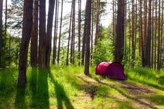 Zelt in einem Wald stockfoto