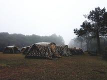 Zelt im Wald Stockfoto
