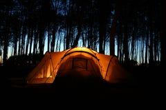 Zelt nachts in einem Wald Stockfoto