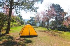 Zelt nahe dem Baum stockfoto