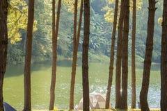 Zelt unter dem Kiefernwald neben dem See morgens Lizenzfreies Stockfoto