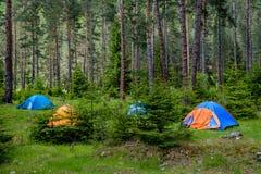 Zelte in einem Kiefernwald Lizenzfreies Stockbild