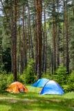 Zelte in einem Kiefernwald Stockbilder