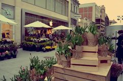 Zement-Blumen Lizenzfreies Stockbild
