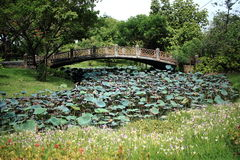 Zement-Brücke über Wasser Lily Field Stockbild