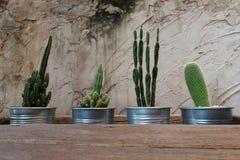 Zementieren Sie die Wand, die mit Kaktus und rauem Holztisch dekorativ ist lassen Sie etwas Raum für Benennung schreiben stockfoto