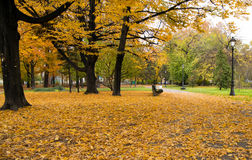 Zemun park in autumn. Glade in autumn forest and tree with yellow leaves Stock Photo