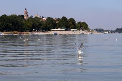 Zemun,Serbia,view from the river Danube. With seagulls in the front Stock Photo