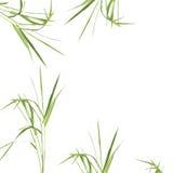 Zen Abstract Bamboo Grass Stock Image