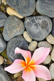 Zen abstrato III Imagem de Stock Royalty Free