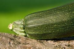 Zen & zucchini Fotografie Stock