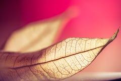 Zen autumn leaf Stock Image