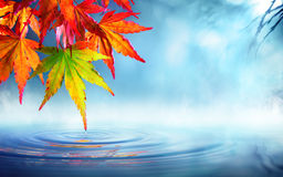 Zen autumn - red maple leaves Royalty Free Stock Photo