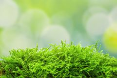 Zen background with moss and a green background representing nature. Zen illustration with moss and a green background representing nature royalty free stock photos