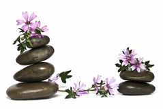 Zen balance and mauve. Zen balance and mauve flowers isolated on a white background Royalty Free Stock Photo