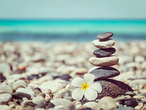 Zen balanced stones stack with plumeria flower Royalty Free Stock Images