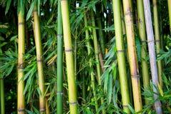 Zen bamboo Stock Images