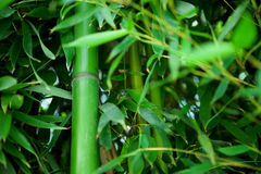 Zen bamboo Stock Photo