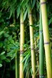 Zen bamboo stock photos
