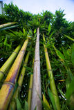 Zen bamboo. Forest green background stock photo