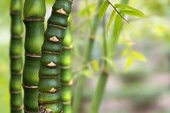 Zen Bamboo Lizenzfreies Stockbild