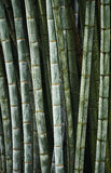 The Zen of Bamboo Stock Photography