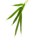 Zen Bamboo Foliage Isolated Over White Royalty Free Stock Photos