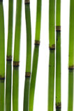 Zen Bamboo Stems Royalty Free Stock Photography