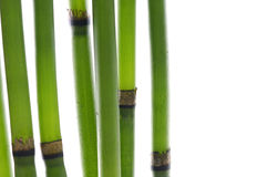 Zen bamboo stems Stock Photo