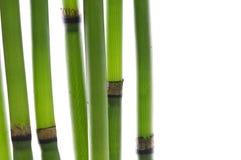 Zen Bamboo Stems Stock Photo