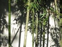 Zen bambus Zdjęcia Royalty Free