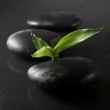 Zen bambus i kamienie Obraz Stock