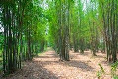 Zen bambusa ogród z spaceru sposobem w lecie Obraz Royalty Free