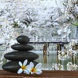 Zen basalt stones and bamboo Stock Photos