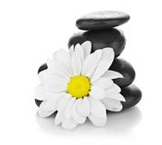 Zen basalt stones and daisy isolated on white Stock Images