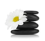 Zen basalt stones and daisy  on white Royalty Free Stock Photos