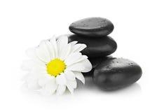Zen basalt stones and daisy  on white Royalty Free Stock Image