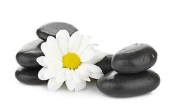 Zen basalt stones and daisy  on white Royalty Free Stock Image