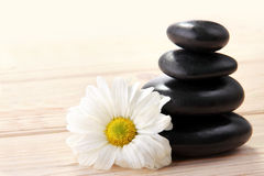 Zen basalt stones and flower Stock Image