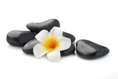 Zen basalt stones and  Frangipani Stock Photography
