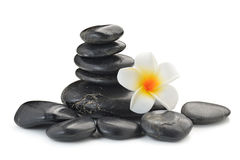 Zen basalt stones and  Frangipani Stock Image